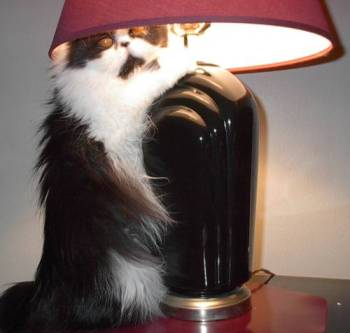 Cheyenne & her lamp
