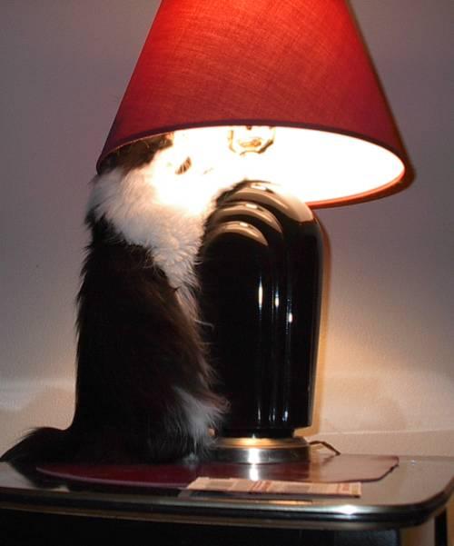 Cheyenne & her lamp3
