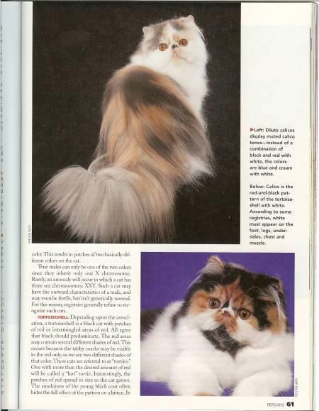 Lionors Magazine photo